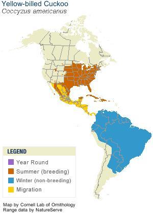 Cuckoo range map