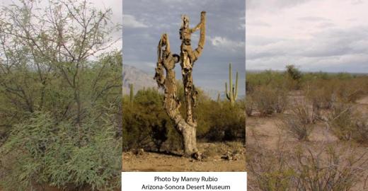 Calendar April 2014 : Life on a dead saguaro arizona daily independent
