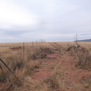 Road carved through ranch by Border Patrol, and cartels