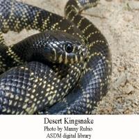 Kingsnake-1