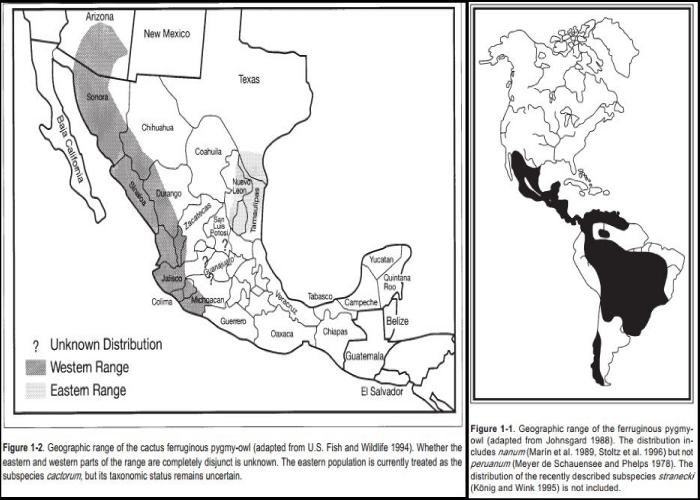 Cactus-ferruginous-owl-range-map2