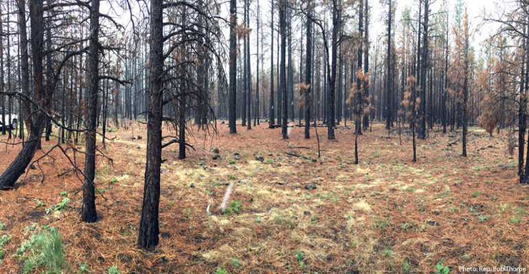 According to USFS officials, due to the Center for Biological Diversity lawsuit, there are now 7,000 acres of dead, burned trees from the 2014 San Juan fire. Photo by: Rep. Bob Thorpe
