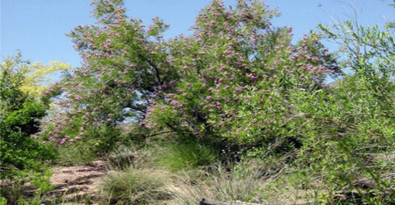 Desert Willows Provide Emergency Food And Medicine Arizona Daily