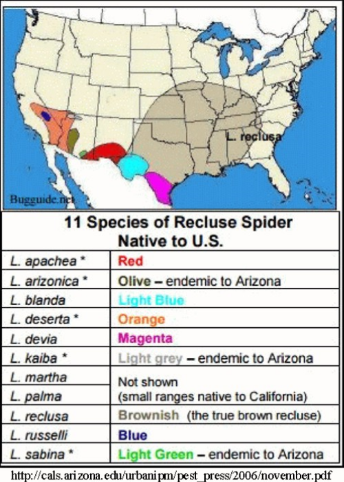 The Arizona Brown Spider A Reclusive Beastie Arizona Daily - Map of poisonous spiders in the us