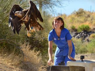 eagle released